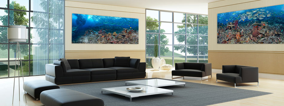 Portrait Of A Coral Reef